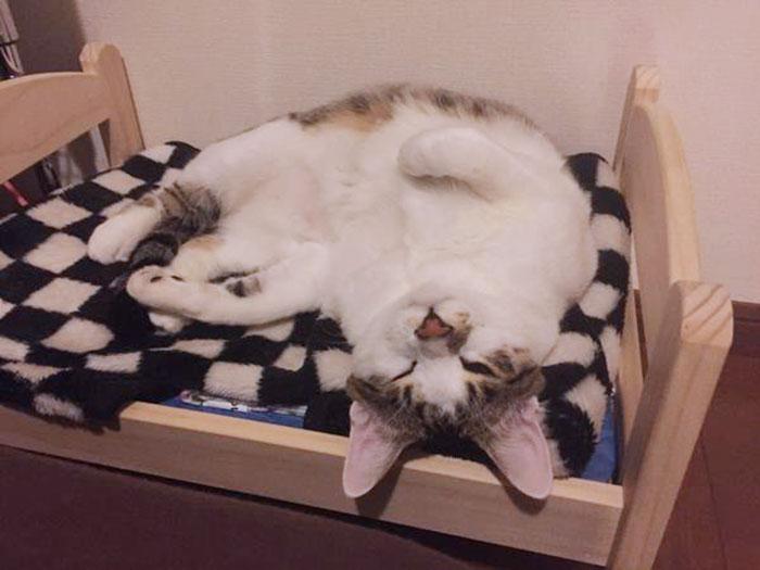 camas gatos ikea 13