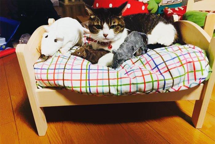 camas gatos ikea 14
