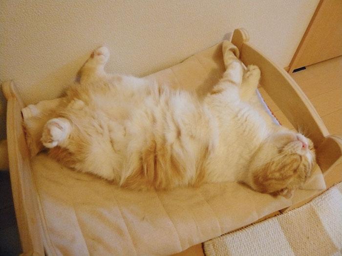camas gatos ikea 4