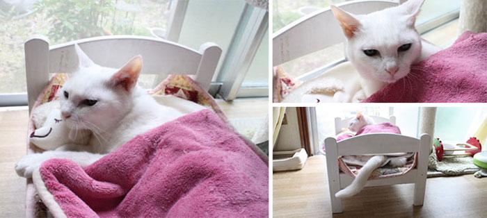 camas gatos ikea 7