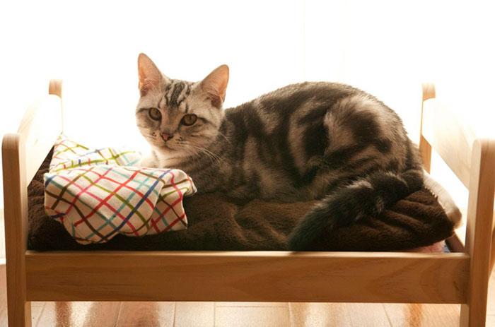 camas gatos ikea 8