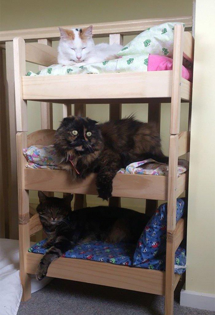 camas gatos ikea 9