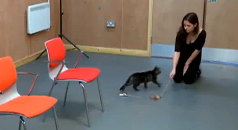 experimento-gatos