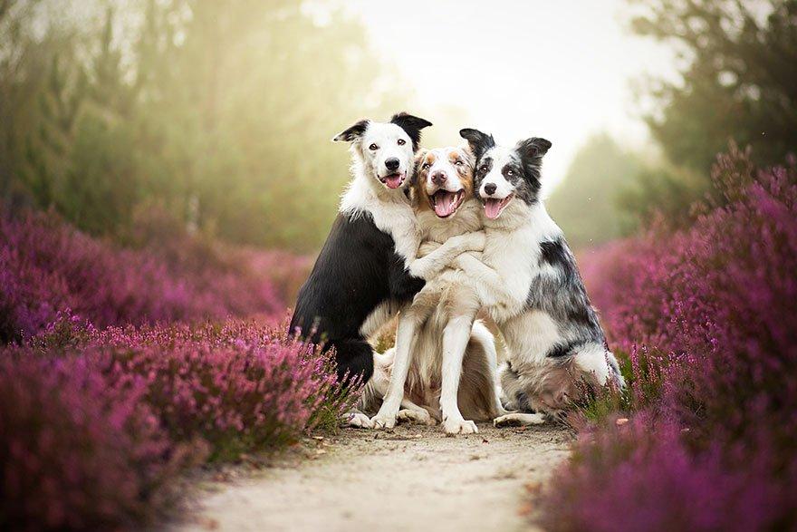fotografia de perros 1