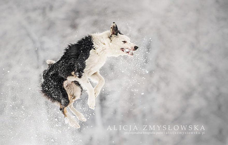 fotografia de perros 10