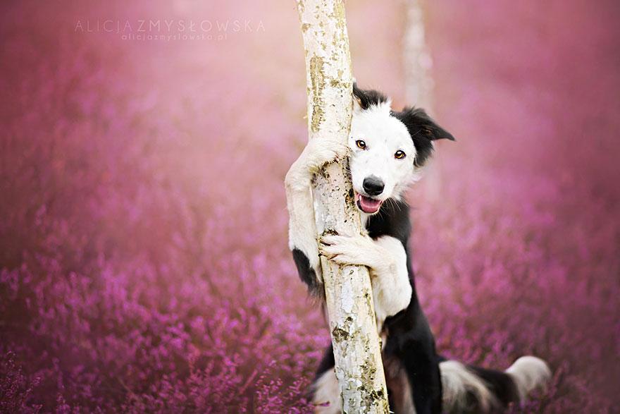 fotografia de perros 12
