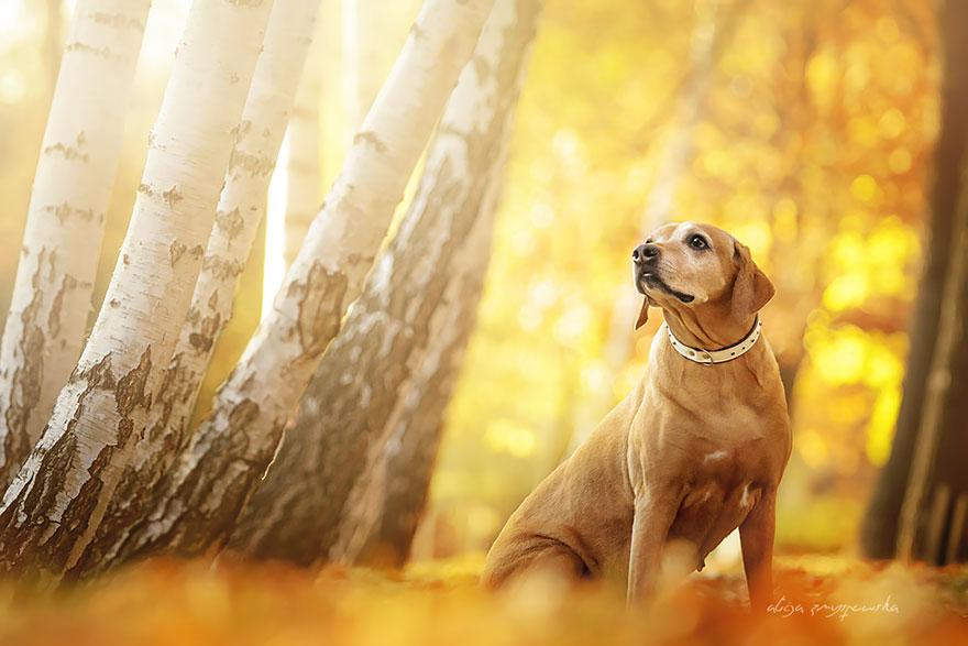 fotografia de perros 13