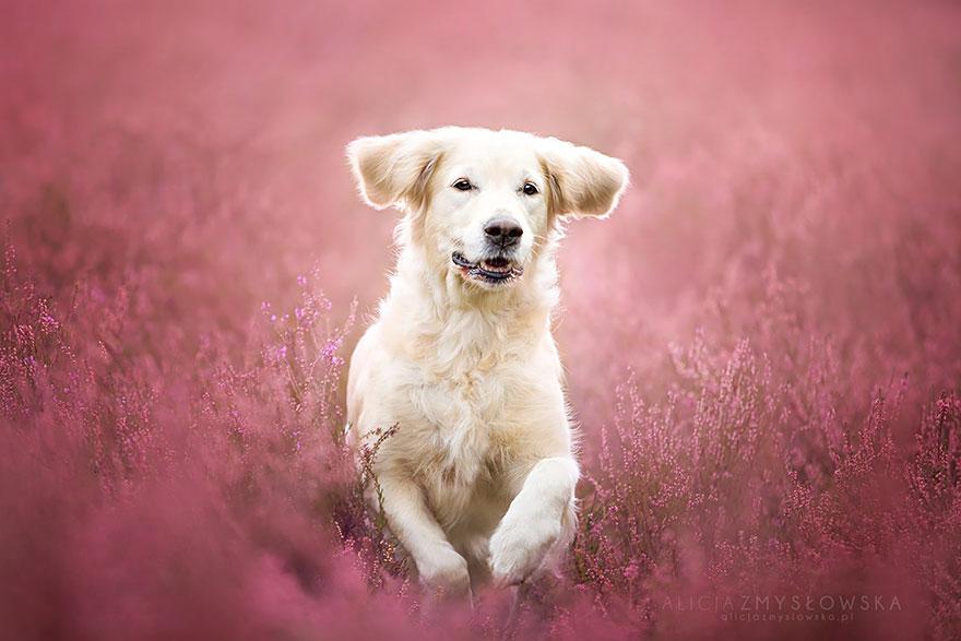 fotografia de perros 14