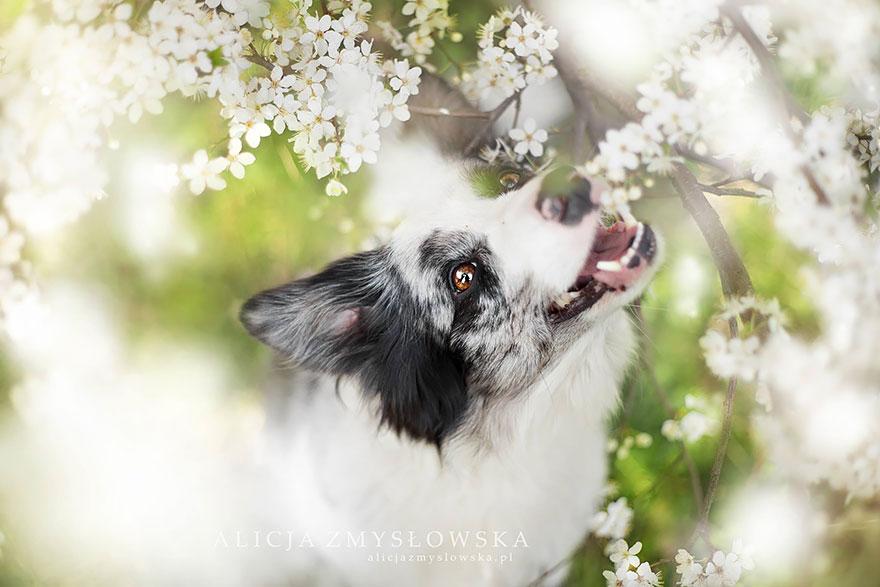 fotografia de perros 15