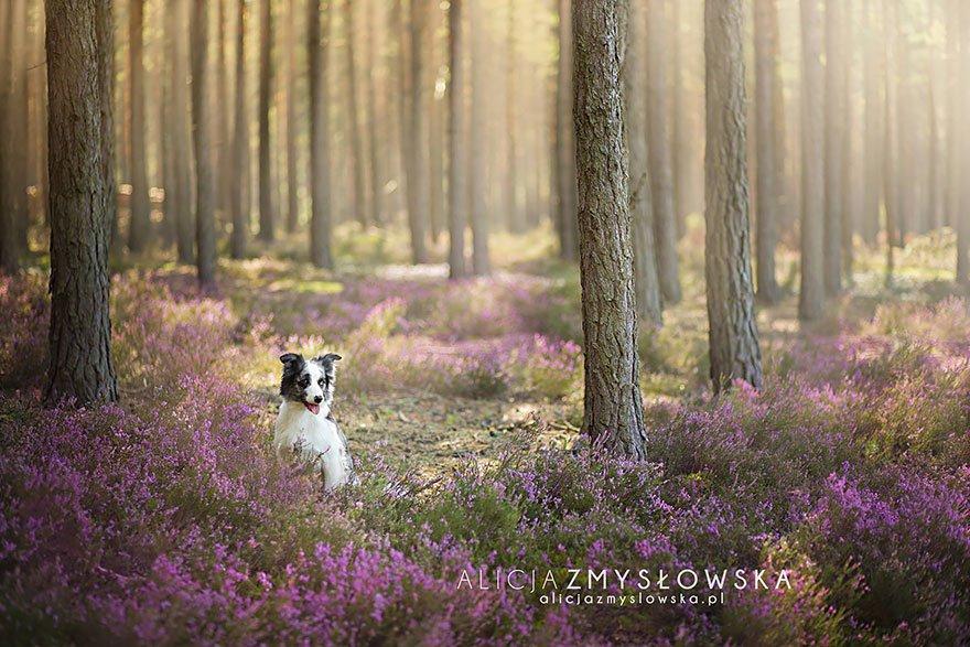 fotografia de perros 17