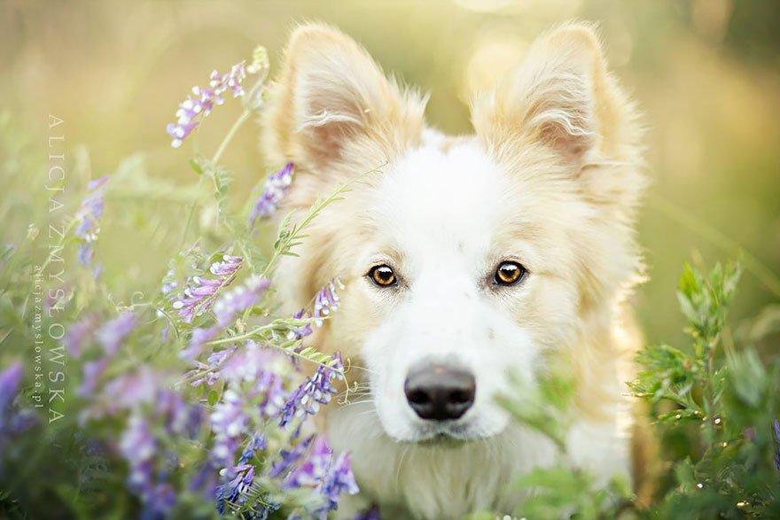 fotografia de perros 18