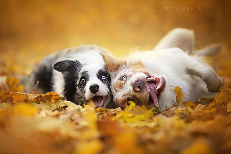 fotografia de perros 19