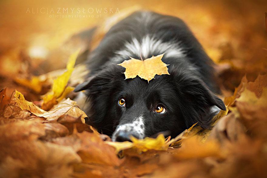 fotografia de perros 2