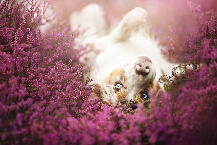 fotografia de perros 20