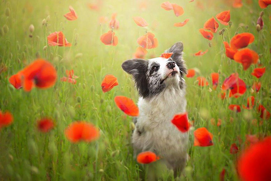 fotografia de perros 3