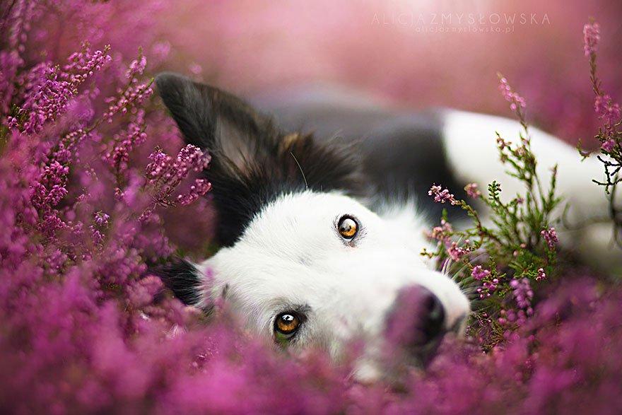 fotografia de perros 4