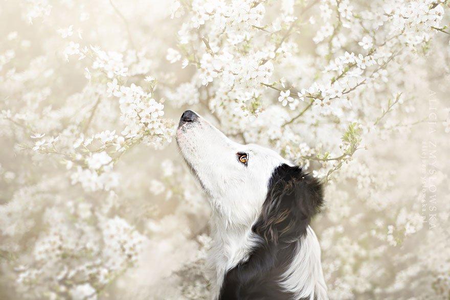 fotografia de perros 5