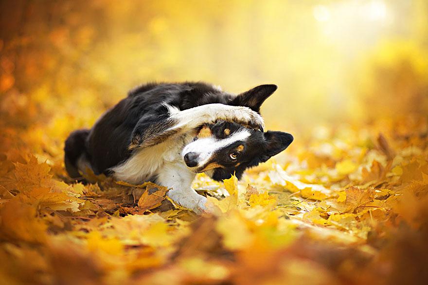 fotografia de perros 6