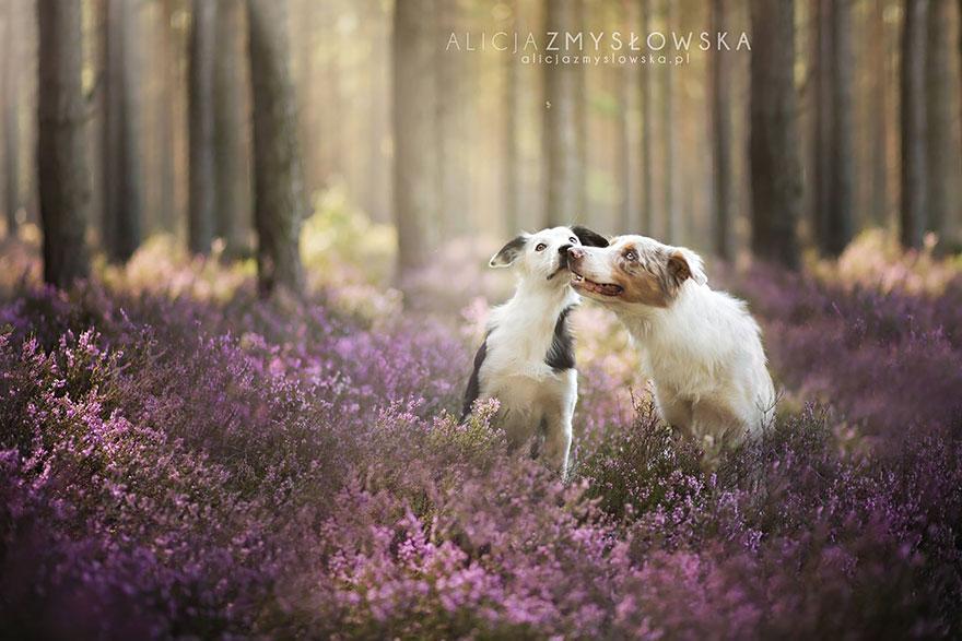 fotografia de perros 7