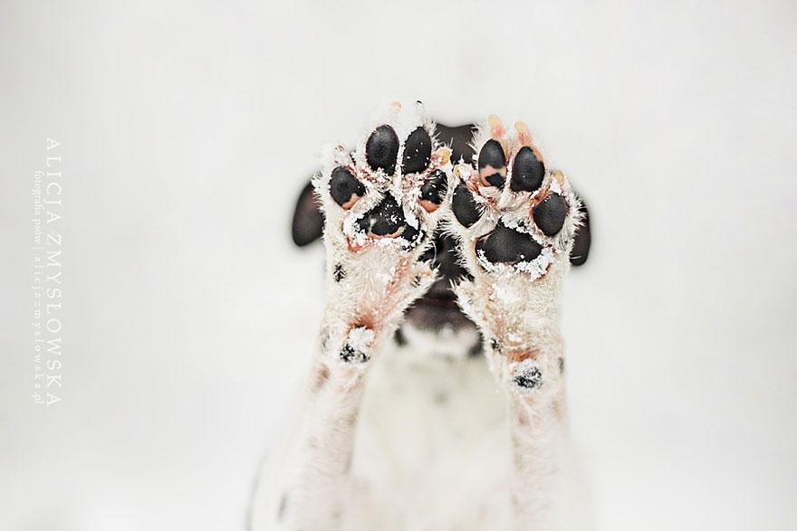 fotografia de perros 8
