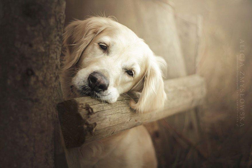 fotografia de perros 9