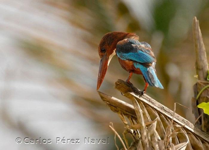 ganador_wildlife_photographer11