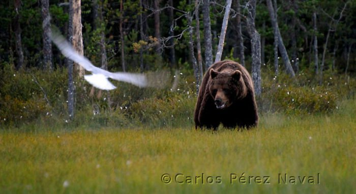 ganador_wildlife_photographer4