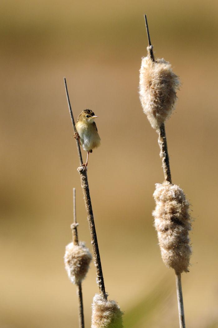ganador_wildlife_photographer6
