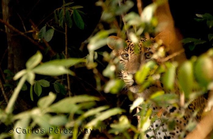 ganador_wildlife_photographer8