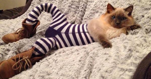 gatos-piernas