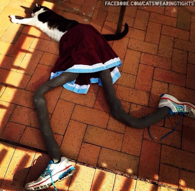 gatos_leggins12