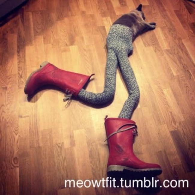 gatos_leggins2