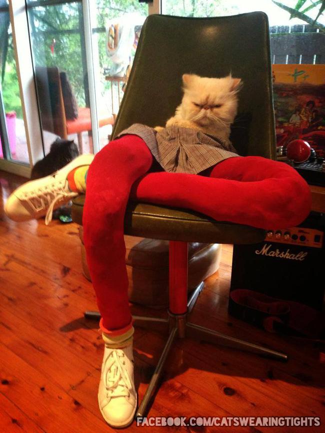 gatos_leggins21