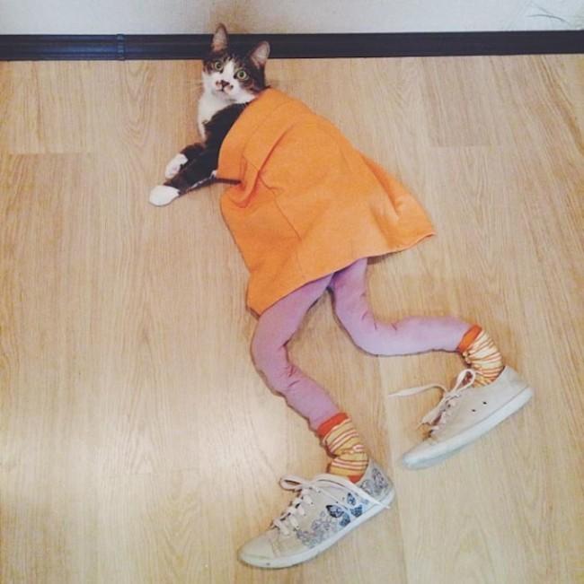 gatos_leggins23