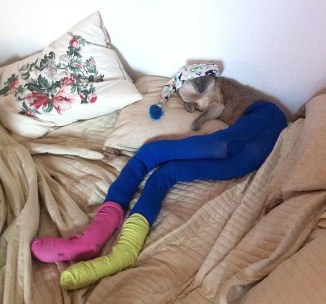 gatos_leggins26