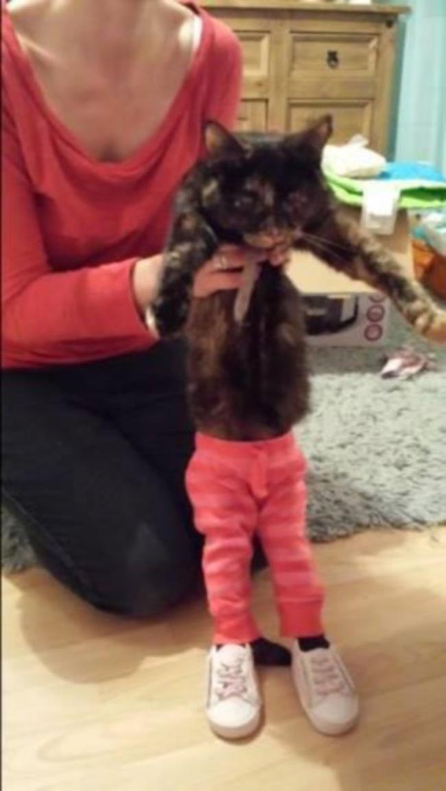 gatos_leggins30