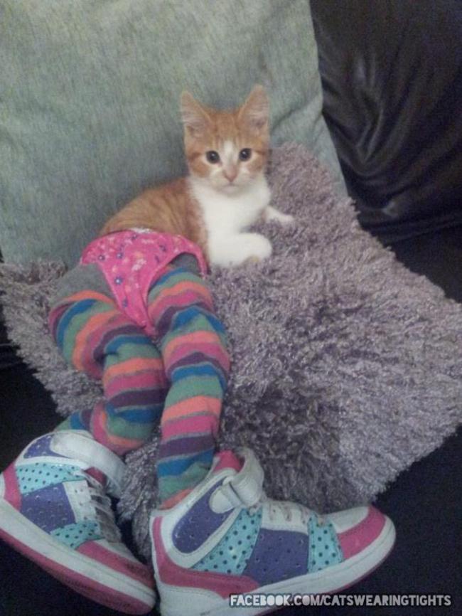 gatos_leggins32