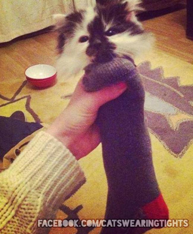 gatos_leggins33