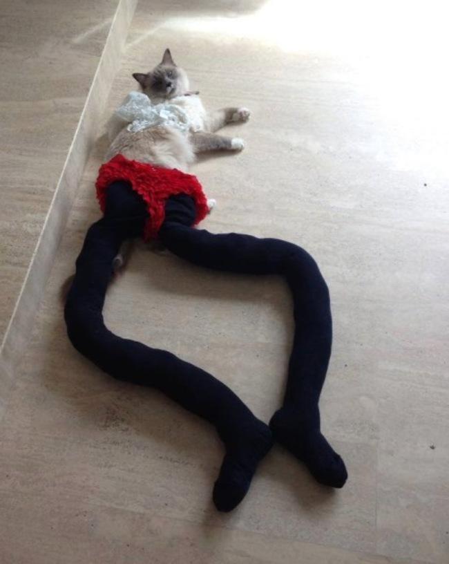 gatos_leggins36