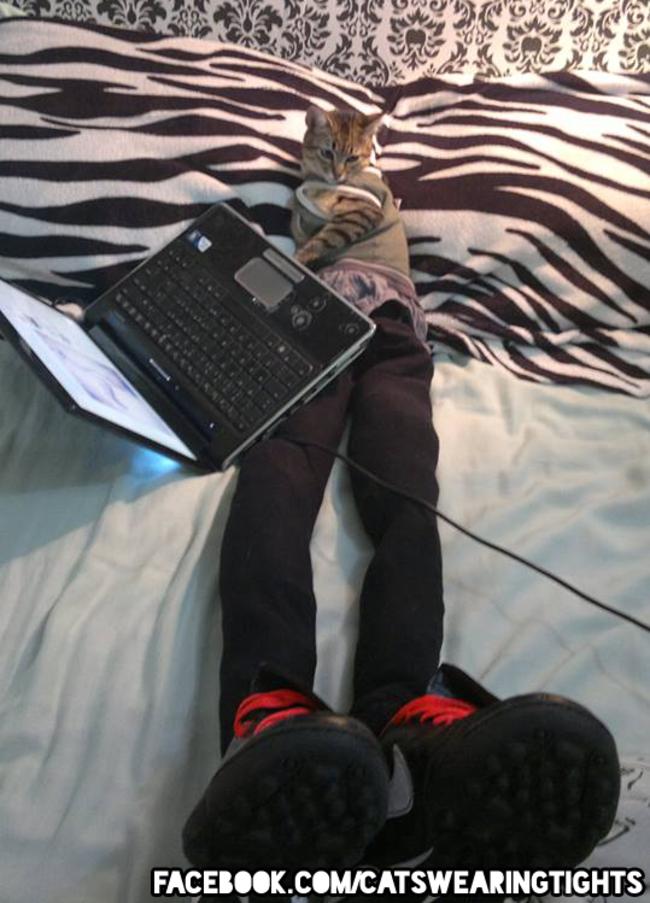 gatos_leggins43