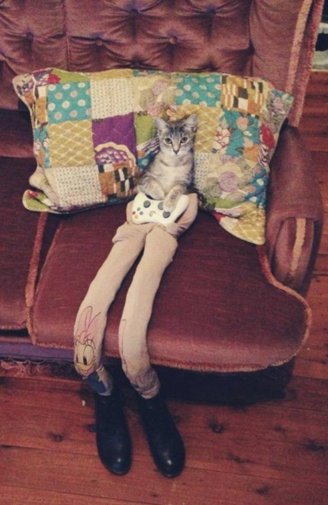 gatos_leggins7