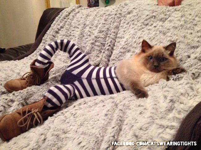 gatos_leggins8
