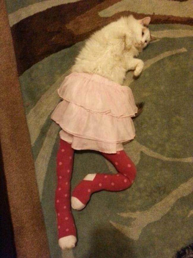 gatos_leggins9