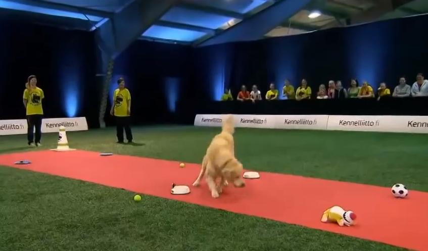 perro-gymkana-prioridades