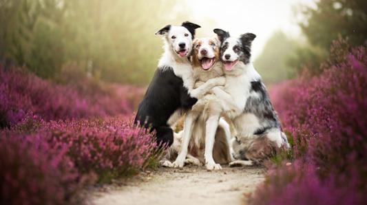 perros-fotos