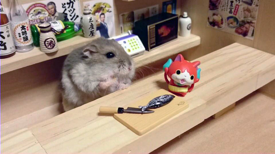 ratones japoneses 15