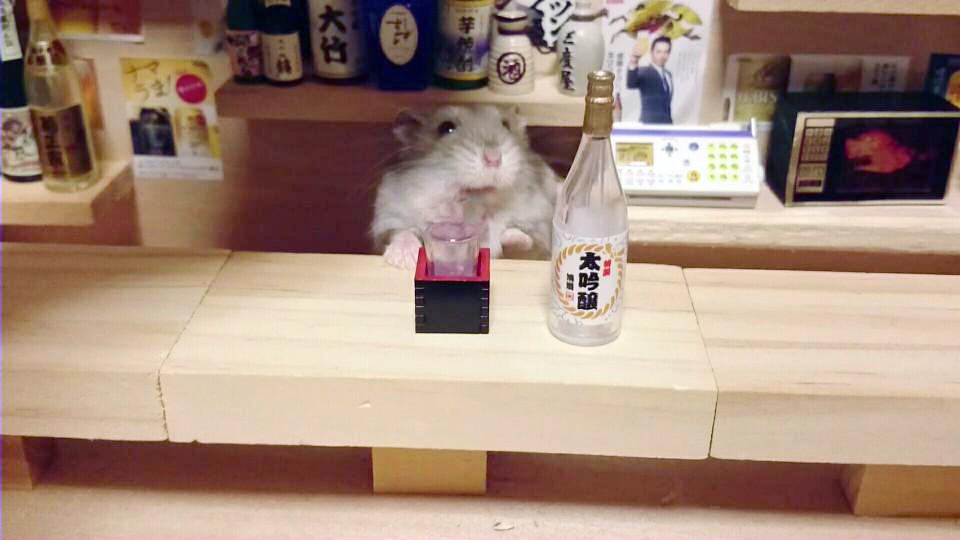 ratones japoneses 16