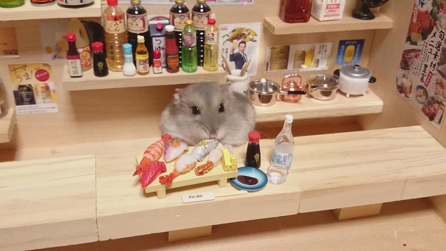 ratones japoneses 6