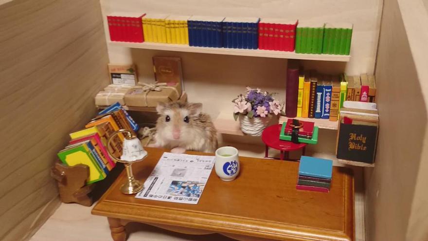 ratones japoneses 9