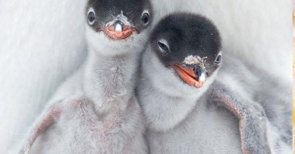 animales-hermanos